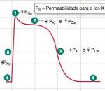 grafico pa