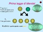 mendel1