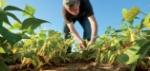 مفهوم_الزراعة