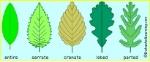 leafmargins