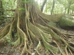 prop roots