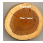 heartwood & sapwood