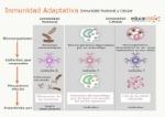 inmunidad_adaptativa
