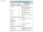classes of animal viruses