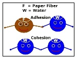AdhesionCohesion