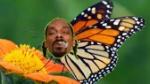 butterflysnoop-671x377