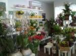 tienda-aromas_1434710756
