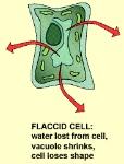 plasmolysis flaccid