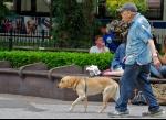perros-y-mayores