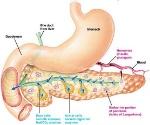 pancreas (1)