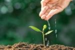 agricultura-plantas-creciendo-planta-de-semillero-nutrir-y-regar-las-manos-jovenes_35048-1558
