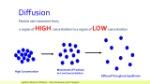 diffusion-year-8-science-dr-lakshmi-sharma-3-638