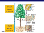 LOW+water+potential+HIGH+water+potential