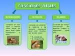 funciones-vitales-de-los-seres-vivos-3-638
