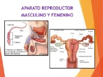 APARATO+REPRODUCTOR+MASCULINO+Y+FEMENINO