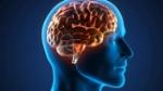 Imagen-cerebro-humano_EDIIMA20150406_0336_4