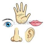 47251693-ilustración-de-ojos-oídos-nariz-labios-mano-