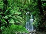 Bioma, selva tropical
