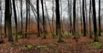 Bosque-caducifolio