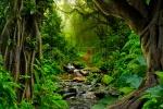 68186512-selva-tropical-con-el-río