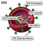 HIV-Virus-Spanish-600