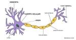 neuronasf