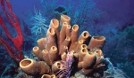 esponjas-marinas