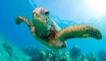 fotos-tortugas-marinas