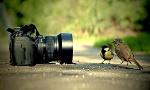 Basics-of-Nature-Photography-edcampus-1