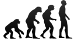 635911496334456789-evolution