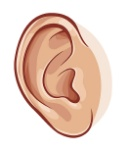 ear-clipart-2