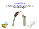 biology-form-5-chapter-4-45-reproduction-in-flowering-plants-42-638
