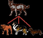 le_dogs2