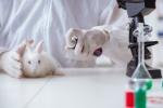 animal-testing