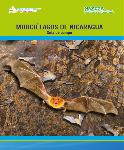 Guía Murci