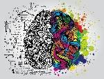 Los-mapas-mentales-te-ayudan-a-estructurar-y-entender-mejor-la-información