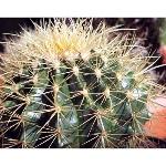 xerophytic-plants-500x500