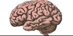 cerebro-ciencia_1