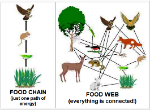 food chain and web