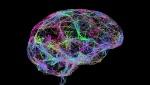 Cerebro-Memoria-1021x580