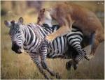 predator prey 2