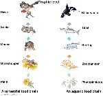 cub-clipart-land-water-animal-496436-6616320