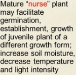 Facilitation-nurse+plants2