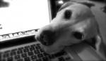 capire-che-il-cane-si-annoia
