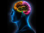 cerebro-humano-21
