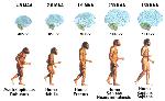 densidade_populacional_influi_no_tamanho_do_cerebro