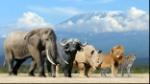 mamiferos-editada