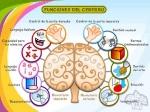 funciones_del_cerebro
