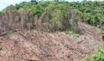 deforestation_in_myanmar