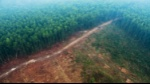 DeforestationIndonesia_CIFOR_web2